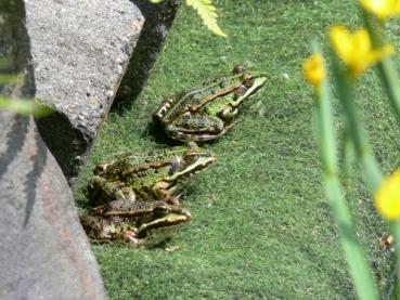 Ufermatte und Pflanztaschen für den Teichrand